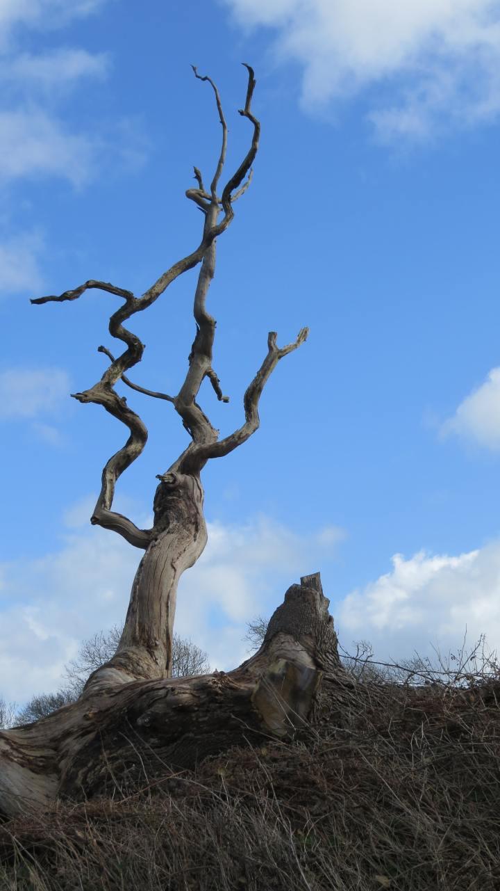 Curse the Tree